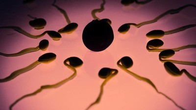 Putting Seaweed Beads in Your Womb Will Trick Sperm into Not Impregnating You