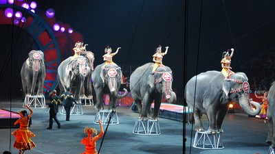 America's Most Famous Circus Elephants Are Retiring to Florida