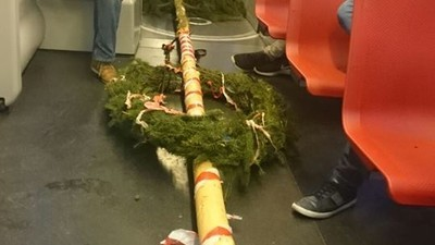 BOKU-Studenten haben einen gestohlenen Maibaum mit der Bim abtransportiert