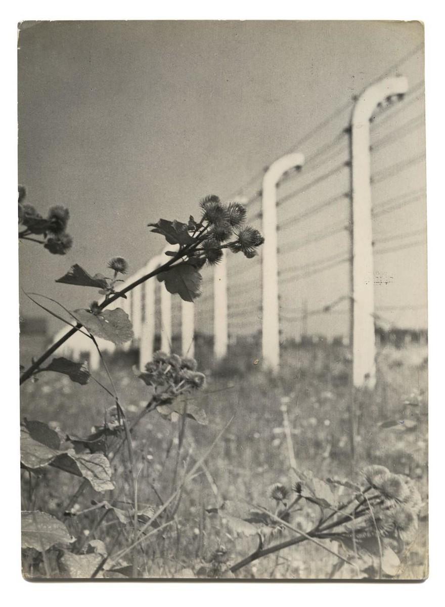 Groetjes uit Auschwitz: een boek vol ansichtkaarten uit het concentratiekamp