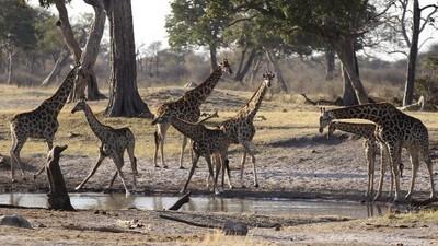 Zimbabue está vendiendo a sus animales para librarlos de la sequía