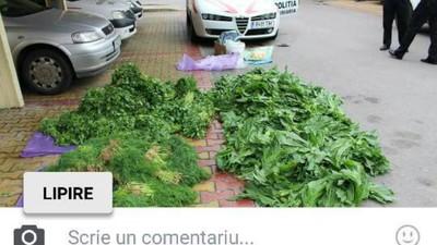 Polițiștii locali au făcut o captură imensă de verde în Piața Obor, dar acum o regretă