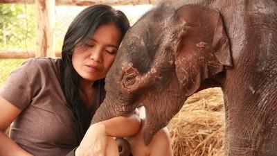 """""""Sie leiden ihr Leben lang"""": die Elefantenretterin von Thailand"""