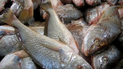 De zeldzame ziekte waardoor je ruikt naar rotte vis