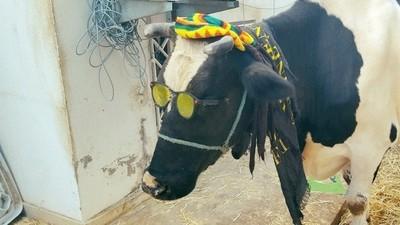 Knackt ihr den Highscore dieses Games, bekommt ihr eine echte Kuh