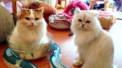 Humane Society Removes Cats from Canadian Cat Café Amid Abuse Allegations
