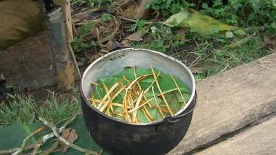 De inheemse cultuur van de Amazone wordt kapotgemaakt door ayahuasca-toeristen