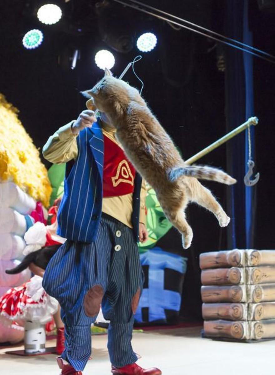 Foto's van een bizar bezoekje aan het kattencircus in Moskou