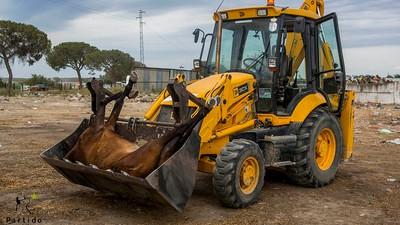 La cara oculta del Rocío: este año también morirán decenas de animales