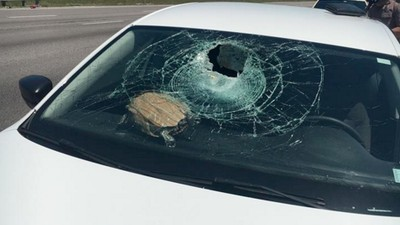 A Turtle Smashed Through a Woman's Windshield Like Real-Life 'Mario Kart'