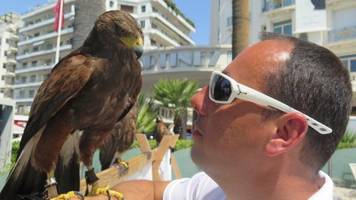 The Hawk Trainer Assigned to Protect Movie Stars from Seagulls at Cannes