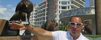 Le fauconnier qui empêche les mouettes de Cannes d'emmerder les stars