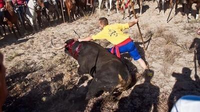 No, la Junta de Castilla y León no ha prohibido el torneo del Toro de la Vega