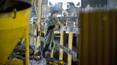 Cash for Kim: de Noord-Koreaanse dwangarbeiders die zich doodwerken in Polen