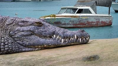 O australiano de 72 anos que venceu uma gangue de crocodilos com uma chave inglesa