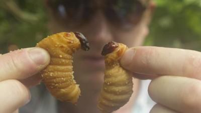 Zijn insecten wel een goeie oplossing voor het wereldvoedselprobleem?
