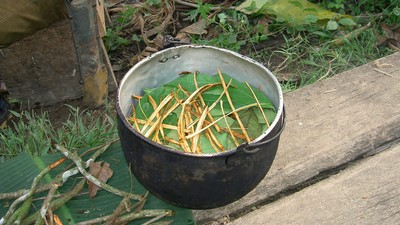 We Asked Why Someone Would Take Ayahuasca More Than 20 Times