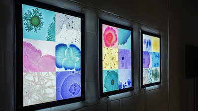 A Synthetic Biologist's Beautiful Palette of Bacteria Art