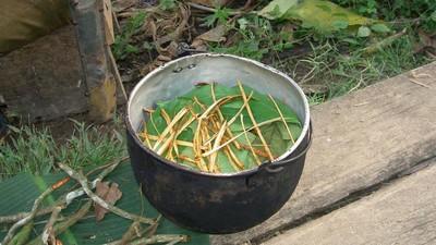 Hablamos con gente que ha tomado ayahuasca más de 20 veces
