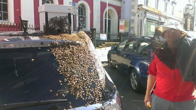 A Massive Swarm of Bees Chased a Woman's Car for Days After Their Queen Got Stuck in the Trunk