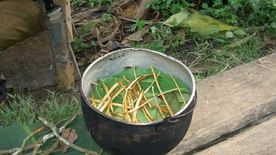 Interviste a persone che prendono l'ayahuasca fino a 20 volte all'anno
