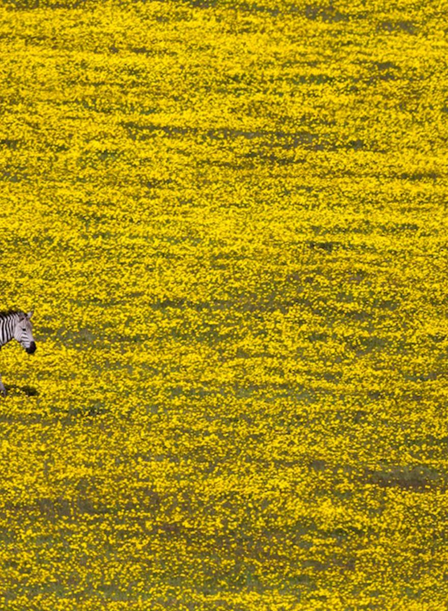 So surreal waren die Bilder des 'National Geographic'-Fotowettbewerbs noch nie