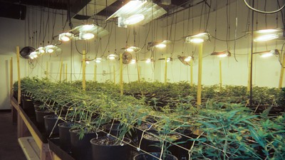 Can America's Weed Industry Provide Reparations for the War on Drugs?
