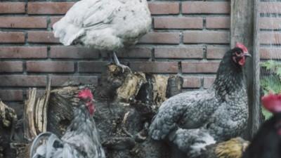 In Nederland betekent preppen voor je eigen kostje kunnen zorgen