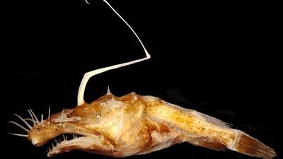 Los más raros de los más nuevos: organismos recién descubiertos por la ciencia