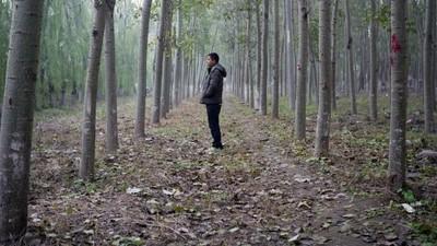 În spitalele nereglementate din China, care castrează bărbați