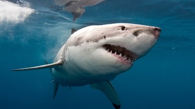 ​We Asked an Expert if Shark Attacks Are Really Getting Worse Because of Climate Change
