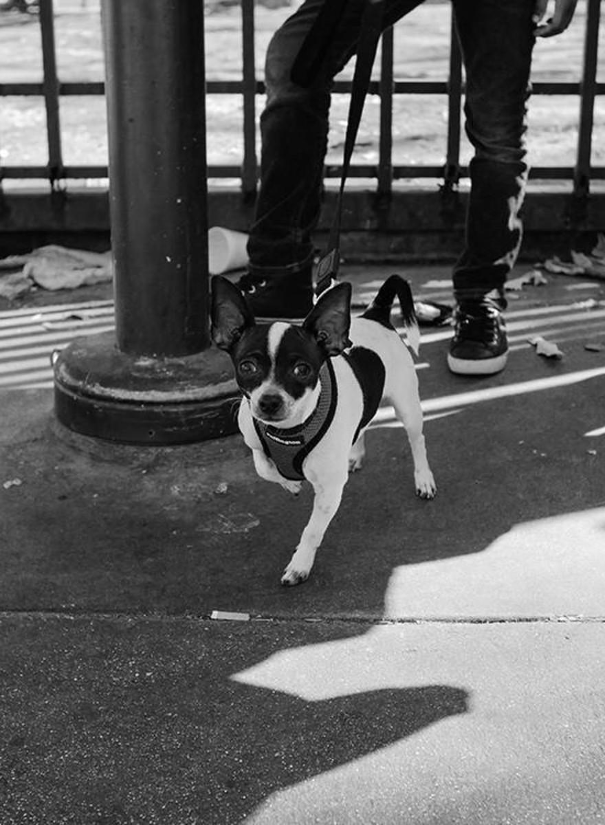 Algunos indigentes nos cuentan lo que significan sus perros para ellos