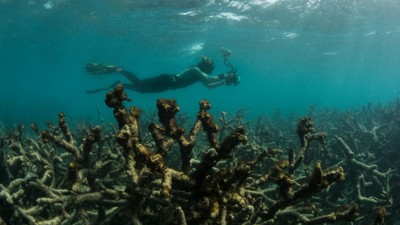 Turns Out Dying Coral Reefs Smell Even Worse Than They Look