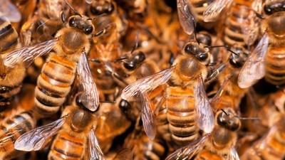 Wie die Welt nach dem Bienensterben aussehen wird