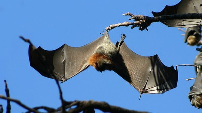 A Plague of Bats Is Holding a Town Hostage with an Aerial Shit Blitz