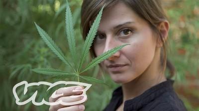 Le Cannabis thérapeutique : entre douleur et prison