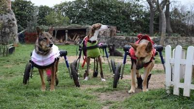 Ortopedia para los animales discapacitados