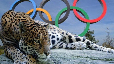 Brazil Brought Out a Jaguar for an Olympic Torch Event and Then Killed It
