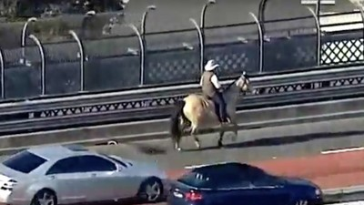 A Farmer Rode His Horse Over the Sydney Harbour Bridge to Protest Mike Baird's New Land Laws