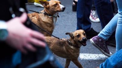 Kako je vašim psima kada ih vodite na proteste