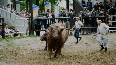 Photos from Japan's Ancient Bullfighting Ritual