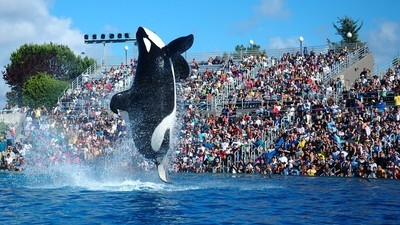 This 15-Year-Old Kid Hacked Everyone from SeaWorld to the Police
