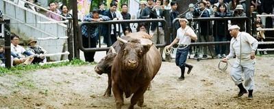 Fotos del Tsunotsuki, el ritual de tauromaquia del antiguo Japón