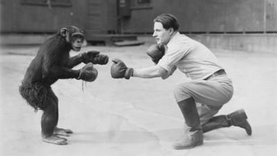 La pelea entre un mono y un niño que dio pie a la ley seca