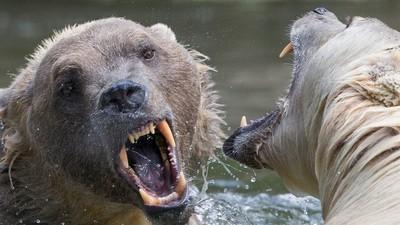A ação humana está fazendo com que animais evoluam artificialmente