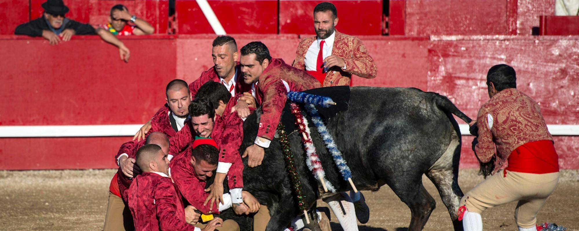 Fotky býčích zápasů bez krve