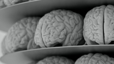Why Two Decades of Brain Research Could Be Seriously Flawed