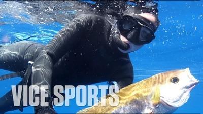 Tipa asta se luptă cu rechinii pentru mâncare