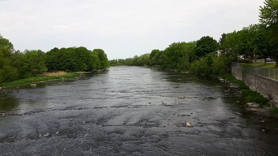 A City in Quebec Killed Thousands of Fish by Dumping Poop in a River