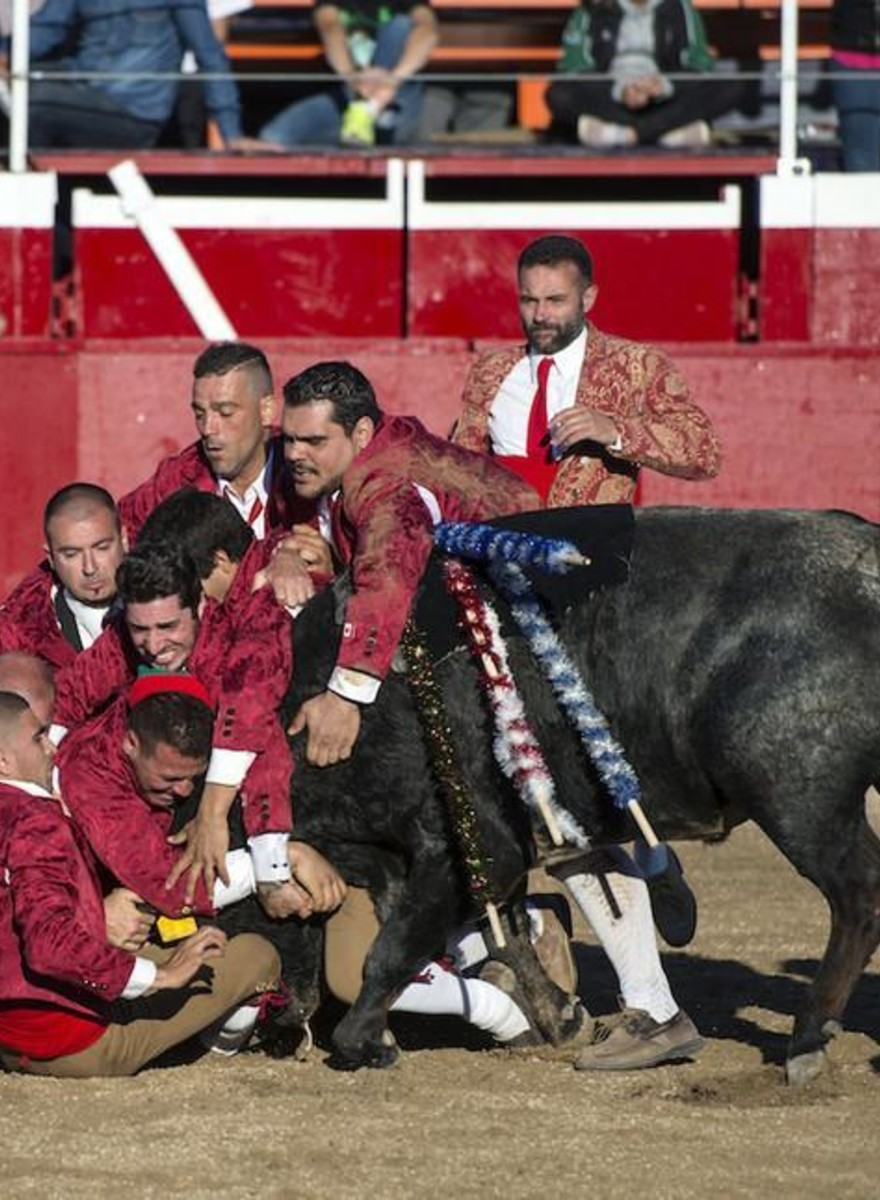 Foto's van bloedeloze stierengevechten op het Canadese platteland